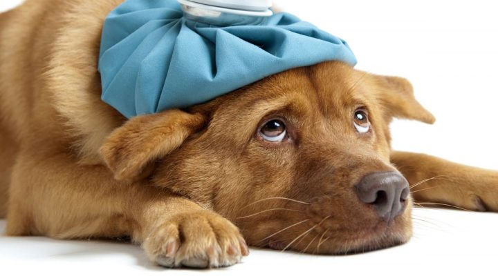 A sick dog looking very sad