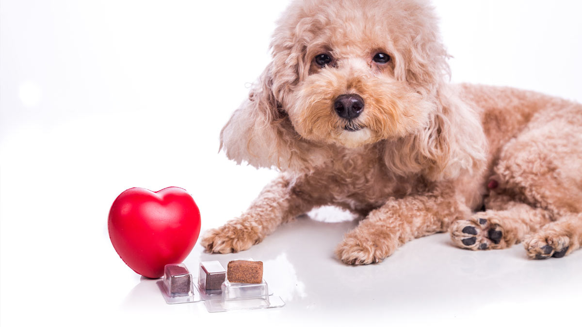 Adorable dog photo